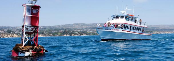 marina-del-rey-whale